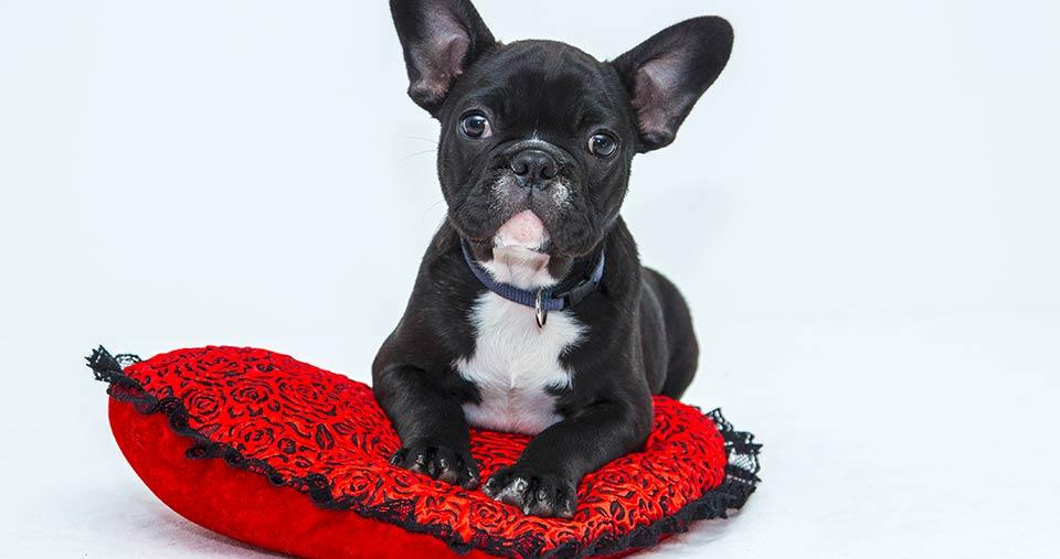 Hundeshooting – Dein bester Freund im Rampenlicht